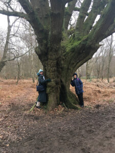 Epping Forest pollard